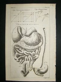 Anatomy:1755 Intestines, Antique Print.